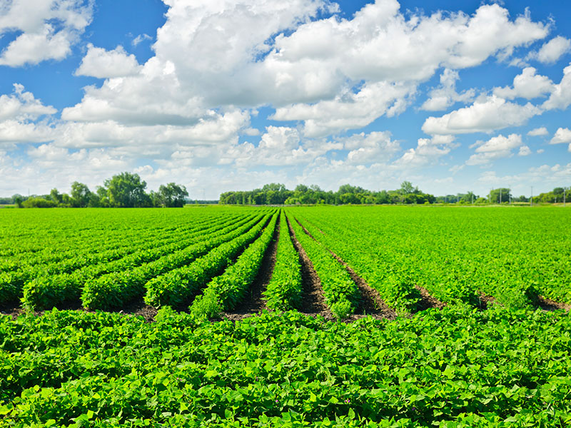Fertilisers/Plant Biostimulants